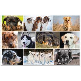 HERMA Schreibunterlage Hunde, (B)550 x (H)350 mm