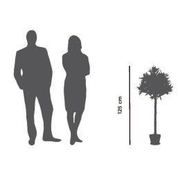 PAPERFLOW Kunstpflanze Olivenbaum, Höhe: 1250 mm