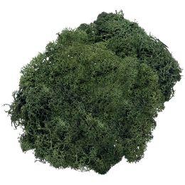 KNORR prandell Islandmoos, 50 g, tannengrün