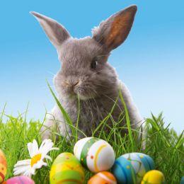 SUSY CARD Oster-Motivservietten Cute bunny